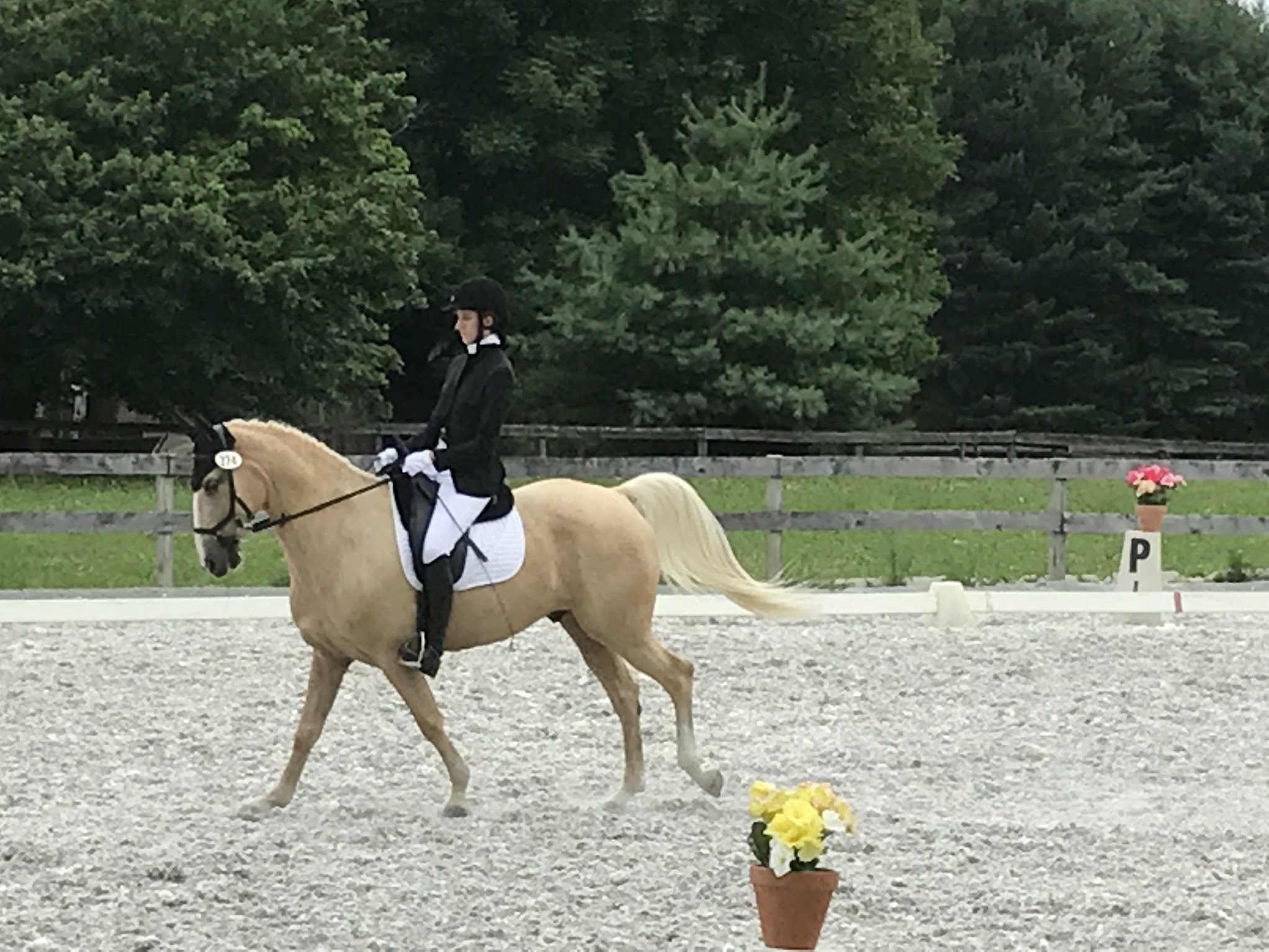 Annie And Watson Competing In Dressage